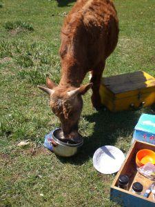 mongolische Gastfreundschaft am Mittagstisch