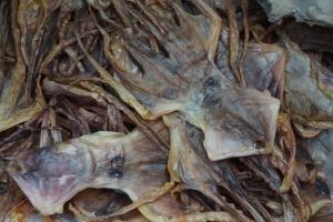 Tintenfisch - getrocknet so platt wie eine Flunder