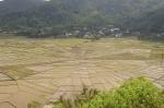 Spinnennetz-Reisterrassen