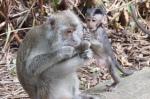 Affenbaby mit Fußfetisch