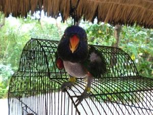 Punk Papagei auf Pandan Island