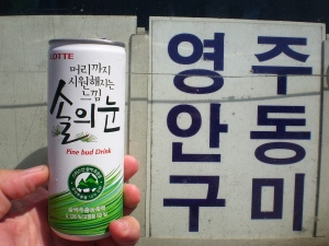 Kiefernknospen-Drink