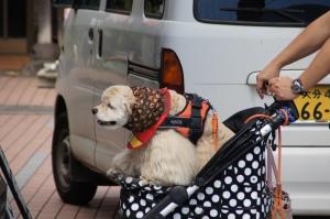 Hund in Kinderwagen