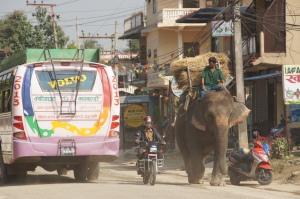 Elefanten im Straßenverkehr