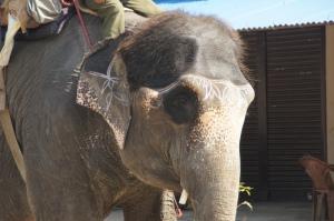 tätowierter Elefant
