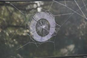 Spinnennetz bei Nagarkot