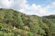 Terrassen auf dem Weg nach Banepa
