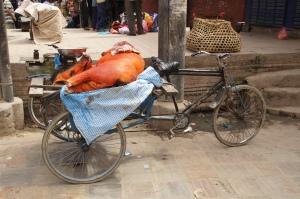 Schwein auf Fahrrad