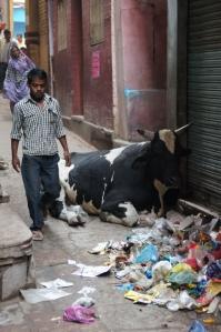 Müll-Kuh in Varanasi