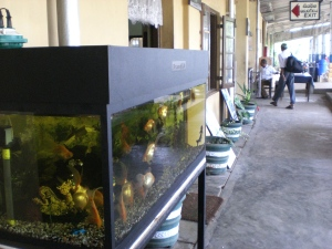 Aquarium auf dem Bahnhof in Sri Lanka