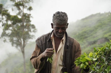 Teepflücker in Haputale