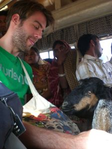 Ziege im Bus