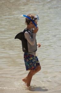 Haie in Brisbane