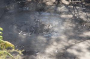 heißes Schlammloch in Rotorua