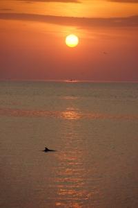 Delfin am Schwarzen Meer