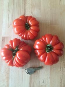 riesige Tomaten